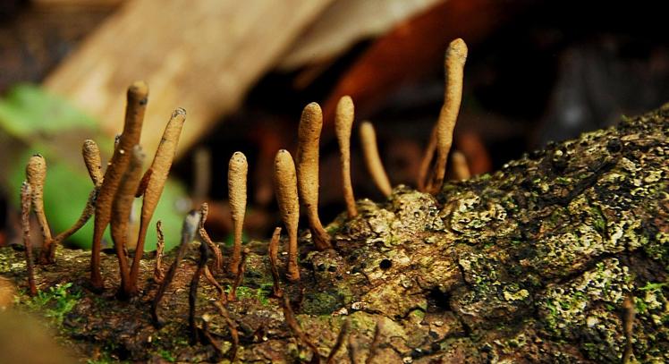 Flora de la Amazonia