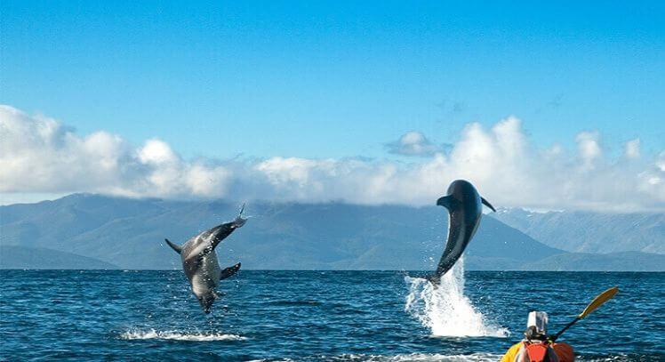 Avistamiento delfines Magallanes