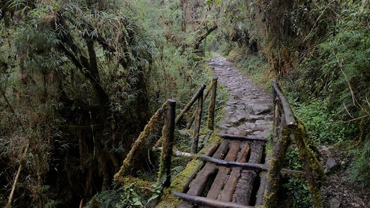 Inca Trail Jungle
