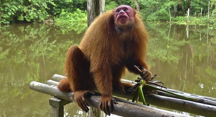 Fauna de la Amazonia