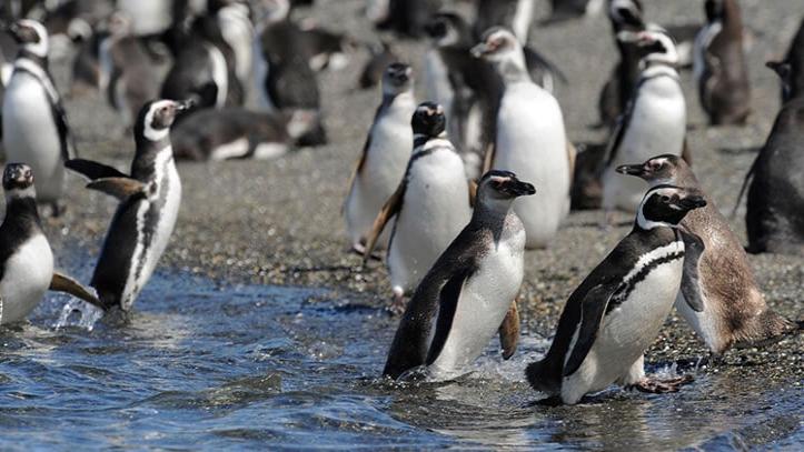 Tour Pinguino Isla Gable