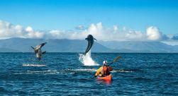 Agua Fresca Bay Kayaking