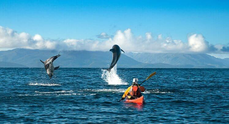 Kayak y delfines Punta Arenas