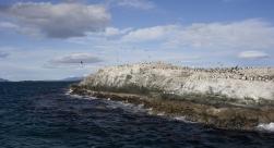 Sea Lion Island, Penguin Colony & Harberton Navigation