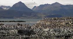 Navegação Ilha dos Lobos e Pingüineira
