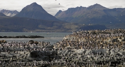 Sea Lion Island & Penguin Colony Navigation