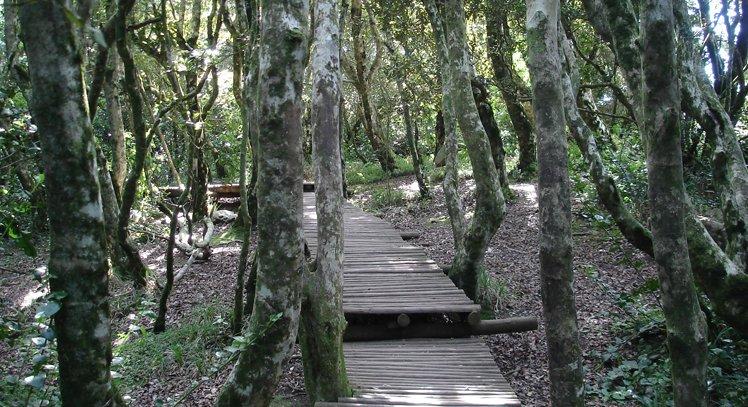Parque Nacional Fray Jorge e Vale do Encanto