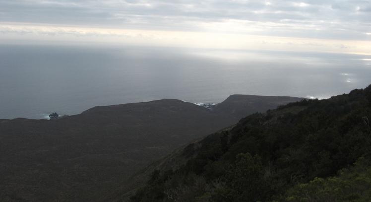 Bosque Valdiviano Fray Jorge