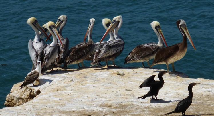 Tour Islas Pzalomino