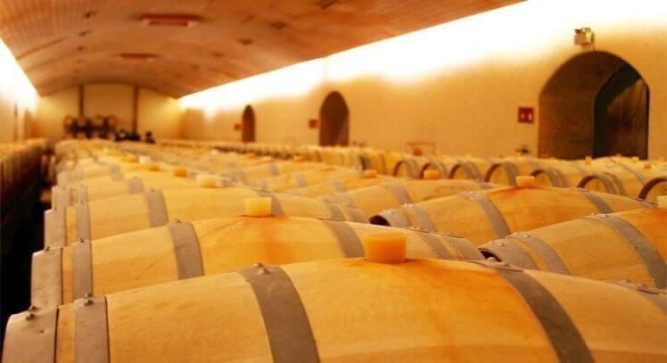 Barriles en viñedo