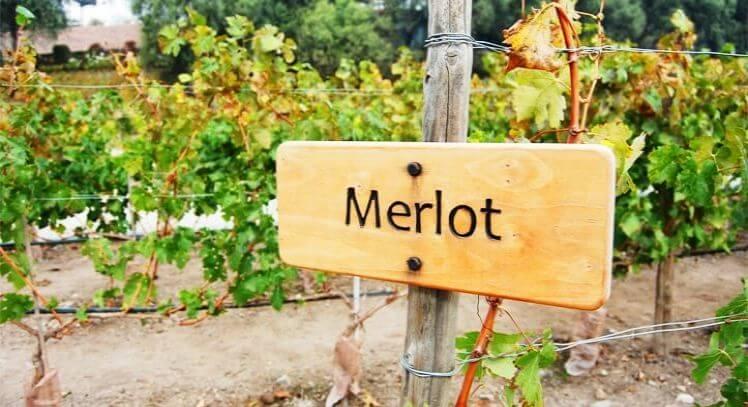 Tour Merlot