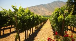 Santa Rita Winery Tour