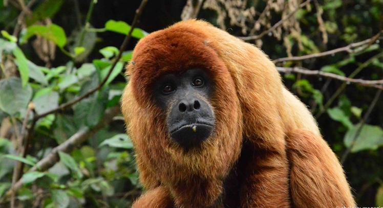 Fauna amazónica en Coroico